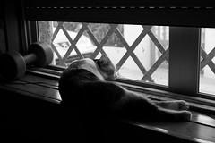 siesta (pepe amestoy) Tags: blackandwhite indoor elcampello spain fujifilm xe1 voigtländer color skopar 2535 vm m mount
