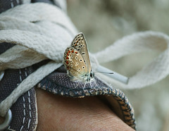 MM#Staying Healthy (Inka56) Tags: stayinghealthy macromondays butterfly sportsshoes macro 7dwf macroorcloseup