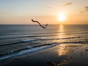 Kite at sunset - cerf-volant au coucher du soleil (Loki7777) Tags: sunset indian ocean océanindien bali indonésie indonesia kite cerfvolant quadricopter dji
