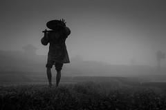 Selamat Sore (parenthesedemparenthese@yahoo.com) Tags: dem bw bali blackwandwhite champsderiz hand indonesia indonésie landscape main man monochrome nb noiretblanc ricefield silhouette trees arbres brouillard byn canoneos600d day dehors ef50mmf18ii farmer fermier fog homme jourdepluie journée juillet july loneliness outdoor pluie rain rainingday seul solitude summer été