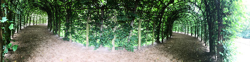Green walkway panorama