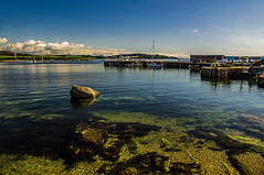 Millport Bay Harbour (Brian Travelling) Tags: sealife sea creatures clean clear rocks dolphins basking sharksbasking sharks dolphin whales water scotland