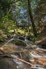 Ablauf unterer Nassenwieser Teich (HangShootFrame) Tags: harz mountain tree forest green landscape long exposure stones water sticks