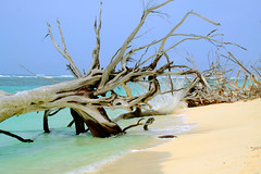 Seychelles, Bird Island (ClaDae) Tags: seychellen seychelles birdisland island tree beach sun sand water blue green colors travel travelphotography nature outdoor ngc geolocation geocountry