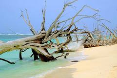 Seychelles, Bird Island (ClaDae) Tags: seychellen seychelles birdisland island tree beach sun sand water blue green colors travel travelphotography nature outdoor