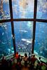 Monterey Bay Aquarium (Steve Holsonback) Tags: monterey bay aquarium peninsula california