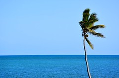 USA Trip 2017 (jaffa600) Tags: unitedstatesofamerica unitedstates usa america stateofflorida florida miami cityofmiami floridakeys thekeys keywest keylargo sea seaside seafront water oceanfront palmtree palmtrees trees