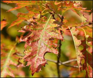 13.09.17 Leaves...
