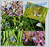 Blåvingar (evisdotter) Tags: blåvingar commonblue polyommatini fjärilar butterflies insect nature macro collage allpicssooc