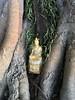 Wat Jom Nang 5 (SierraSunrise) Tags: วัด buddha buddhism idol nongkhai phonphisai religion sacredtree shrine thailand