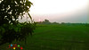 Calming down (Genius Wizard) Tags: sun northeastindia assam mangotree green paddyfields ricefields