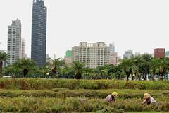 Green & Gray - Kaohsiung (Chapo78) Tags: taiwan kaohsiung green grey garden farm city gardener