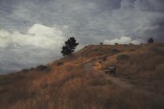 Anticipation (charhedman) Tags: munsonmountain happybenchmonday penticton okanagan bird benches trail grass tree