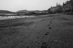 Gone Again (Bert CR) Tags: atlantic eastcoast holiday seaside vacation bicnationalpark parcnationaledubic footsteps beach lowtide shoreline bw blackandwhite blackwhite monochrome skancheli