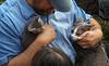 IMG_2556 (kz1000ps) Tags: boston massachusetts bostoncommon common park cats kitties kittens felines caturday purr catcafe brighton humane society adoptions oscarthewilde