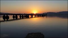 Sea Eagle Sunrise (GTV6FLETCH) Tags: woywoynsw australia whitebelliedseaeagle canon5dsr 5dsr canoneos5dsr canonef1635mmf4lis