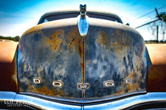 """CTC's Auto Ranch 2017 (early days) Tags: """"classic car"""" cars automobile """"north texas"""" history antique class 1950s rust patina """"junk yard"""" """"salvage parts restoration """"fix up"""" rebuild """"hot rod"""" sedan junk fall 2017 """"canon 7d"""" """"1635mm"""" """"american collector restorable vehicle dodge project engine motor 1950dodgemeadowbrook vintage 4door 6cylinder"""