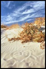 <3 (ukke2011) Tags: nikonf5 nikkor3514g kodakektar100 film pellicola 135 analog analogico sand sabbia beach spiaggia