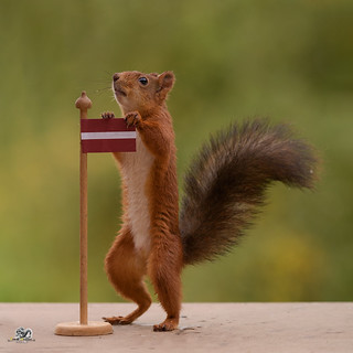 squirrel holding a Flag of Latvia