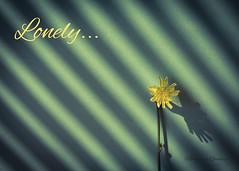 Lonely (Mohammed Qamheya) Tags: nikon d500 nikkor lonely green yellow shadows sad broken autumn sun light mohammedqamheya