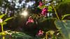 Deep in the forest... (.: mike | MKvip Beauty :.) Tags: sony⍺7markii sony⍺7ii sonyilce7m2 sonyalpha sony alpha emount ⍺7ii ilce7m2 irixfirefly15mmƒ24 irixfirefly irix ultrawideangle rectalinear lowdistortion primelens prime manualexposure manual macro makro wideanglemacro handheld ibis availablelight naturallight backlight backlighting shallowdof bokeh bokehlicious beyondbokeh extremebokeh smoothbokeh dreamy soft zen nature green orange yellow pink magenta flower wildflower leaf leaves summer hagenbach germany europe mth mkvip ngc