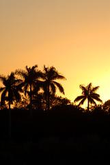 South Florida Sunset (rdodson76) Tags: sunset sunrise dusk dawn landscape florida palmtrees silhouette shadow sun shade dark yellow travel destination vacation view tropic warm