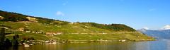 The Lavaux (oobwoodman) Tags: switzerland suisse schweiz vaud cully léman leman lakegeneva genfersee lake lac see lavaux vineyards vignoble vignes vineyard vigne vin rebe epesses