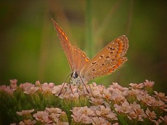 Mini Butterfly 2 by ilfotografodellapausapranzo1 -