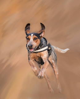Flight of the Hound Dog