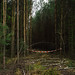 Woods+closed%2C+Brandenburg+%28Germany%29