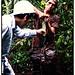 Measuring Brazil nut production