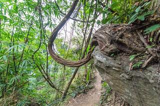 ramkhamhaeng national park - thailande 52