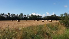 Photo of Harvest time. Llandow