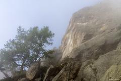 Brume au lever du soleil (belval74) Tags: aiguillesrougesfizpormenaz arbre bois brumebrouillard france hautesavoie leverdesoleil matiere montagne paysage phenomènenaturel vegetaux