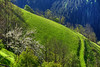 Backlit Spring (hapulcu) Tags: alpen alpes alpi alps italia italie italien italy primavera printemps spring
