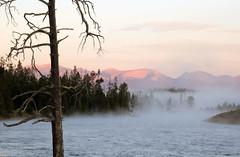 YELLOWSTONE DAWN (dayvmac) Tags: yellowstone montana landscape dawn river fog mist mistymorning