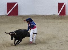 Après l'écart, la queue de la vache glisse entre les cuisses de Louis Navarro (Guillaume Cingal) Tags: course coursayre deyris pomarez landesaoût2017