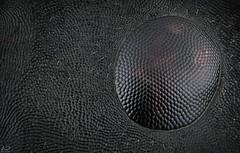 Ant compound eye (Dean Lerman) Tags: ant dean lerman macro nikon mitutoyo micro 5x