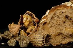 Bread for Macro Monday's (aenee) Tags: aenee nikond7100 sigma105mm128dgmacro 20170821 3inch 7 5cm bread macromondays blackbackground healthy macro muesli mueslibread tarwe walnoot walnut wheat wholewheat dsc7193 20170820
