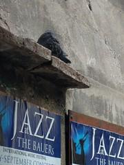 Jazz in Venice - Italy (ashabot) Tags: