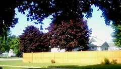 Beautiful summer day - HFF (Maenette1) Tags: beautiful summer day fence trees houses street neighborhood menominee uppermichigan happyfencefriday flicker365
