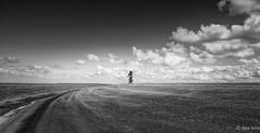 Lonely (Gert Brink) Tags: moddergat zee waddenzee friesland nederland fujifilm xt2