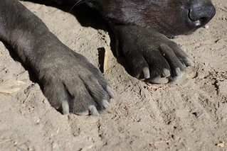 Dusty paws!