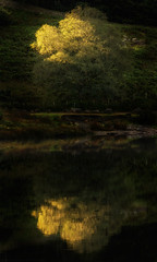 what comes between us (akh1981) Tags: tree manfrotto nikon nisi sunrise tamron rocks travel tranquil outdoors cumbria buttermere landscape lakedistrict lake