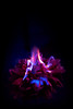 Floating Fire (fred.sommer11) Tags: flower flowers fire burning flame flames purple violet water swimming dark night blue sea mysterious