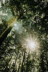 breaking through (micharoth) Tags: sony sonya6000 schwarzwald blackforest black forest green yellow grün wald wanderlust sigma sigmaart 1835 f18 hornisgrinde bad herrenalb ausflug travel explore entdecken hike hiking exploregermany deutschland germany