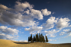 Alone in a Big Sky (Tracey Whitefoot) Tags: tracey whitefoot 2017 summer italy tuscany siena italian europe european toscana landscape cypress tree trees group clouds big sky blue daytime sunny travel tourism famous icon iconic location val dorcia sunshine fluffy white shadows rural farm farming roadside