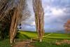 Homeward bound (Kevin_Jeffries) Tags: rural farmland light color f28 1116mm nikon d7100 newzealand spring nature green kevinjeffries