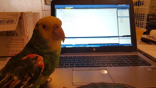 My coworker doing code review