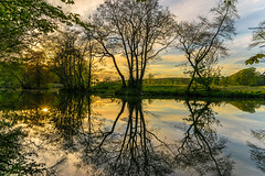 Silhouette & Reflections (ChicqueeCat) Tags: trees silhouette reflections sunset landscape lake water nikon d3300